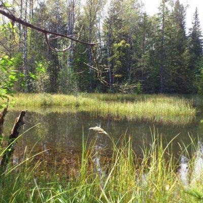 19/8-2011 View Near Bäverhyttan, Alderängarna (http://coord.info/GC1TZP2)